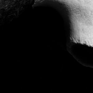 shadows_scars